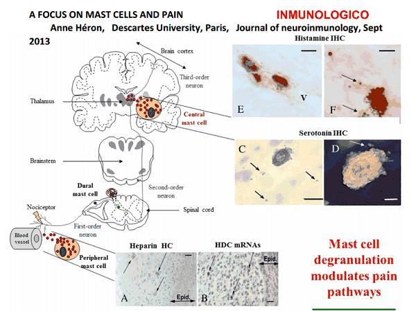 La histamina como moduladora del dolor