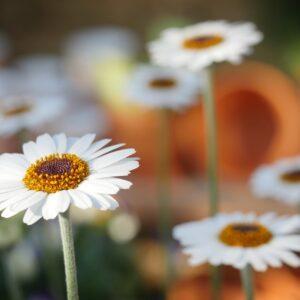 Los alérgicos al polen pasarán una peor primavera