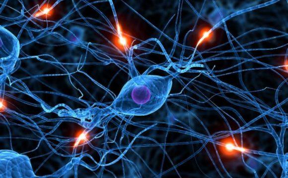 SSC o cómo lograr que se entiendan los sistemas inmunológico, nervioso y endocrino